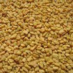 Nasiona kozieradki